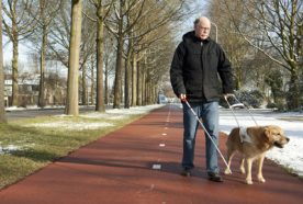 Blind person walking along path with guide dog