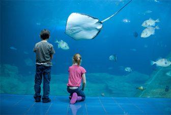 Aquariums as restorative environments