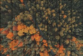 Trees in autumn seen from above with a grid overlay superimposed