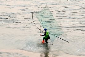 People fish with large nets in shallow water