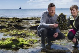 Researchers examine seaweed in a rock pool