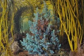 Turquoise Bushy Rainbow Wrack seaweed in a crystal clear pool